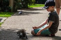 greenwich - squirrel and boy 003