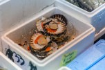London Fish Market 013
