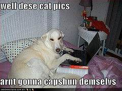 loldog-funny-dog-pictures-well-dese-cat-pics