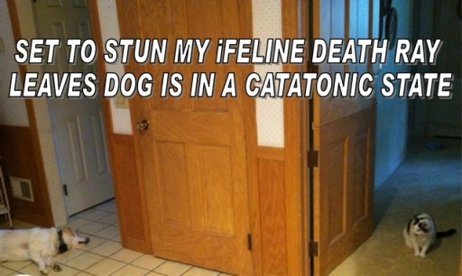 ifeline death ray leaves dog in catatonic state :thinkspin.com
