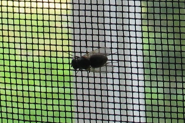 Fly on insect net By Jonas Bergsten