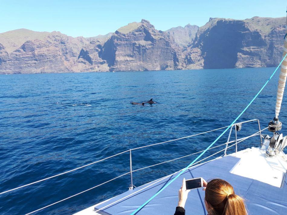 Avistamiento Cetáceos Los Gigantes