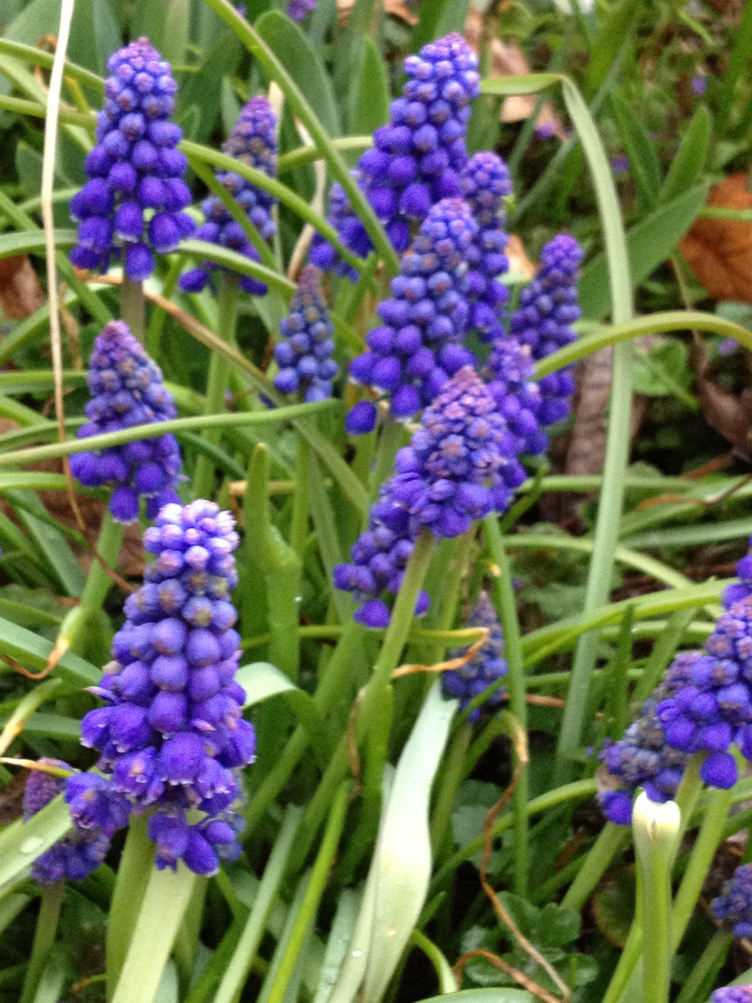 The power of flowers spring in minnesota thirdeyemom a mightylinksfo