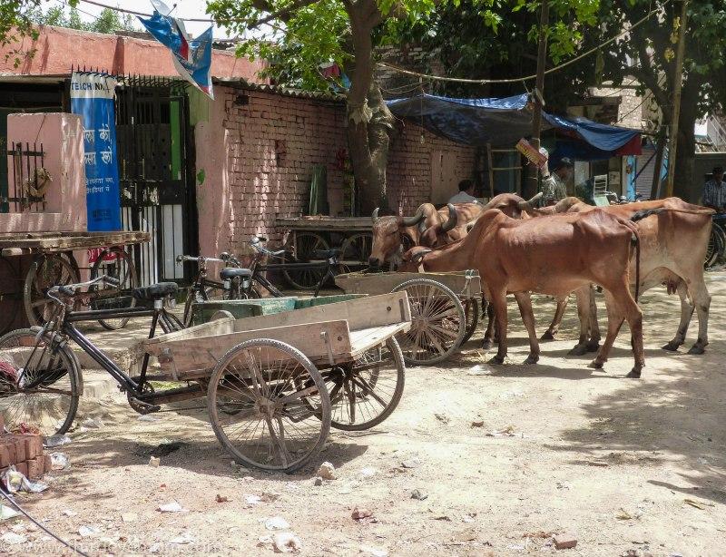 The Indira Kalyan Camp Delhi