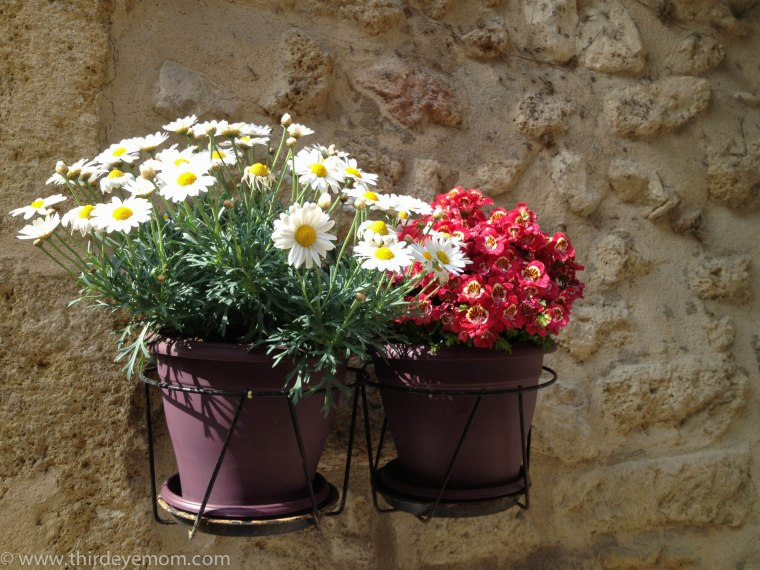 Beautiful hanging flowers in Provence