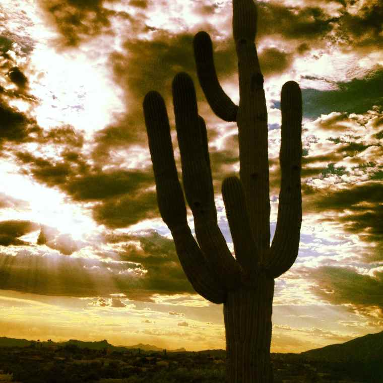 Tucson Arizona Sunset Cactus