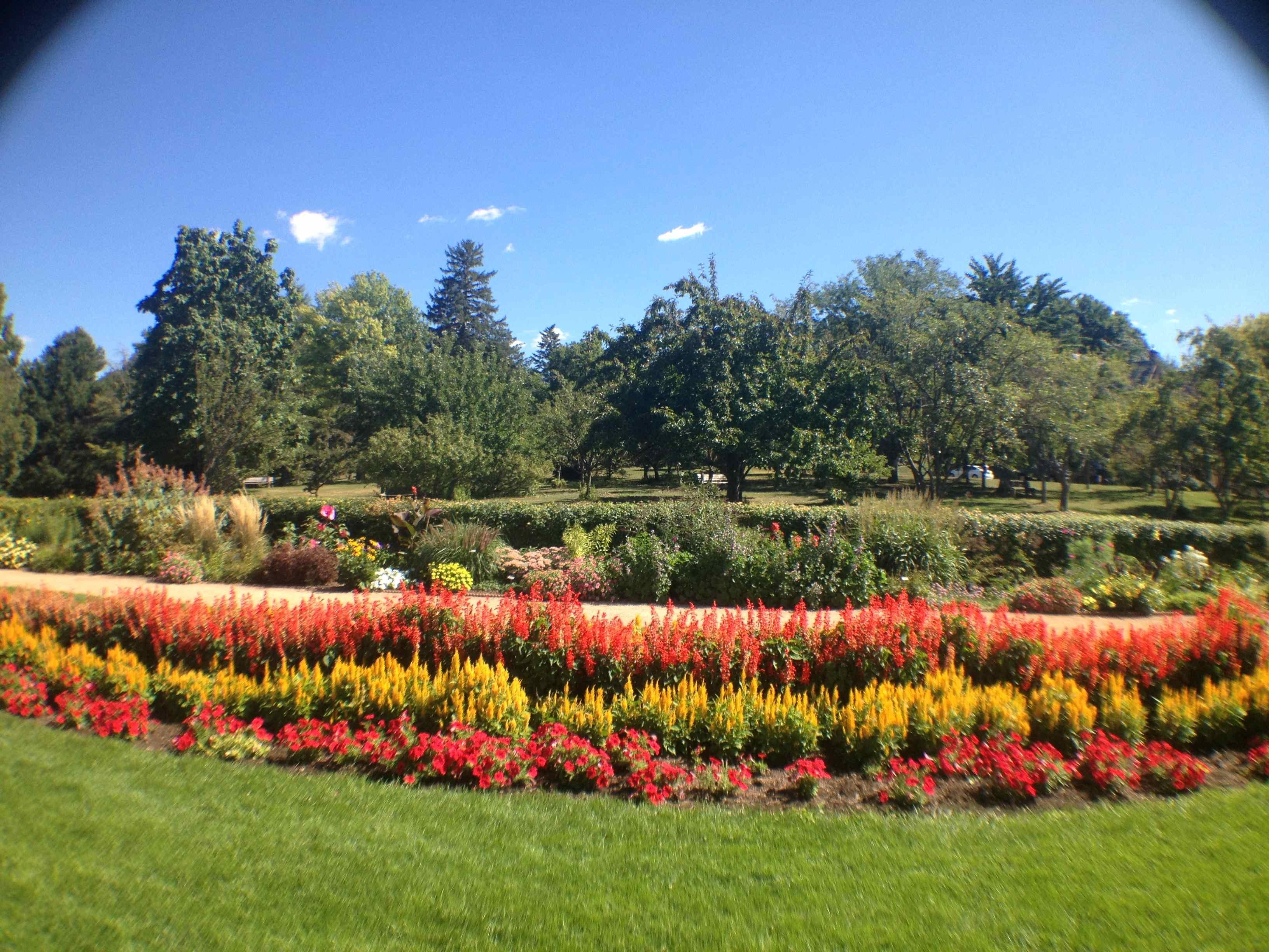 Lake Harriet Rose Garden Minneapolis