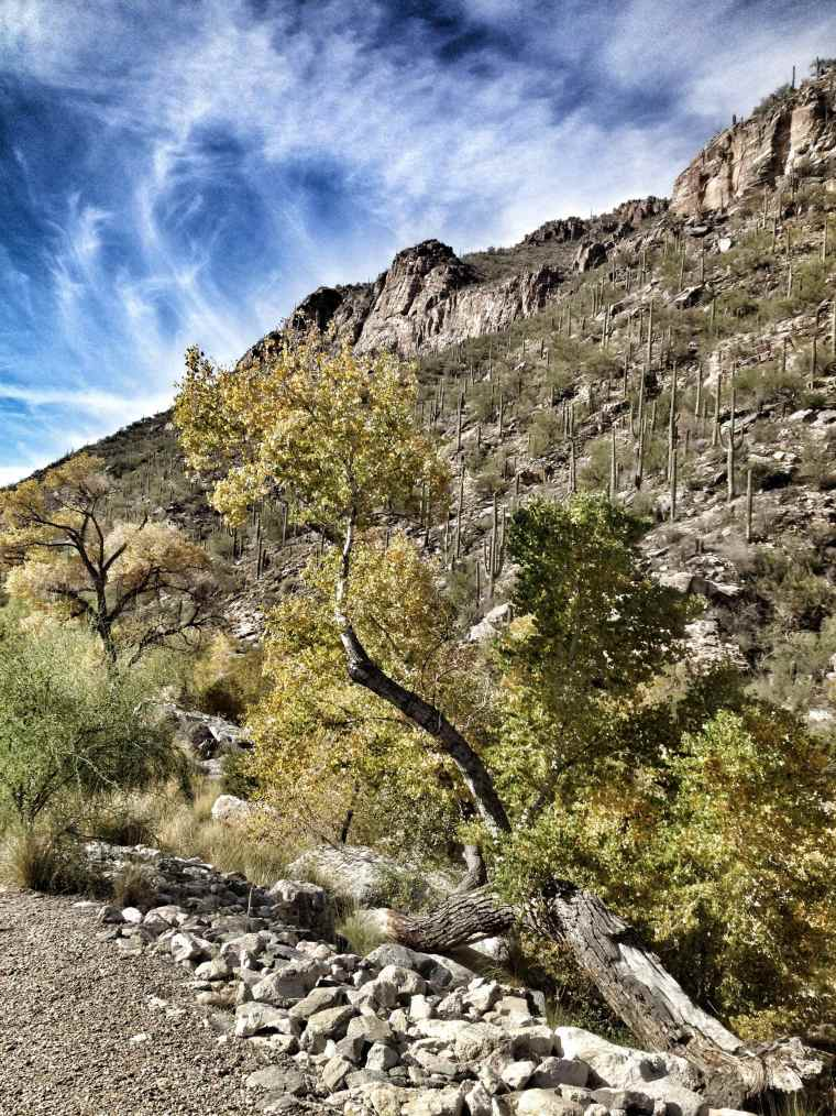 Sabino Canyon. Tucson, Arizona