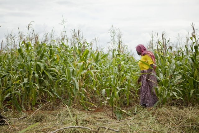 Morogoro region, Tanzania, 2010 Sharifa Idd Mumbi's crop yields have increased dramatically since she started using a newer maize seed more tolerant to drought. Photo Credit: Gates Foundation