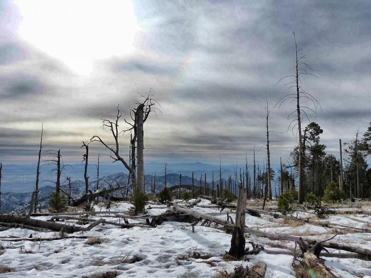 Top of Mount Lemmon Arizona