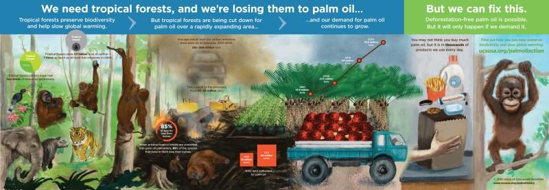 Palm-Oil-2-6-14-2216px