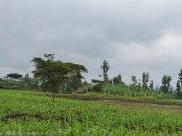 Yetebon Ethiopia