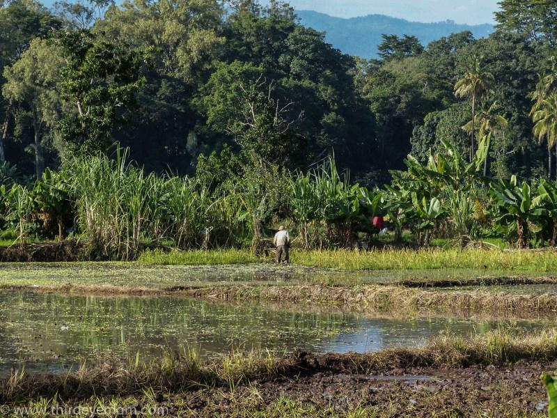 Rice Paddy Fields Moshi Tanzania