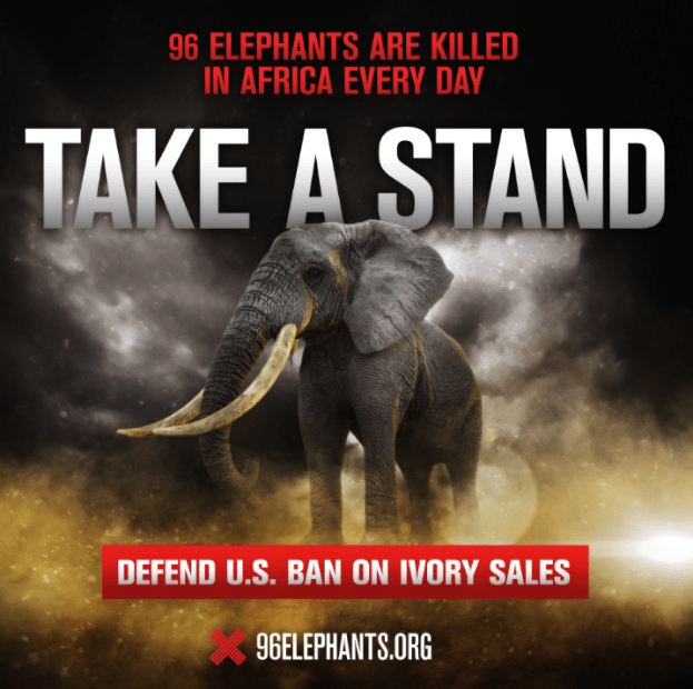 96Elephants_TakeaStand