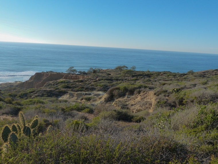 Torrey Pines Reserve California