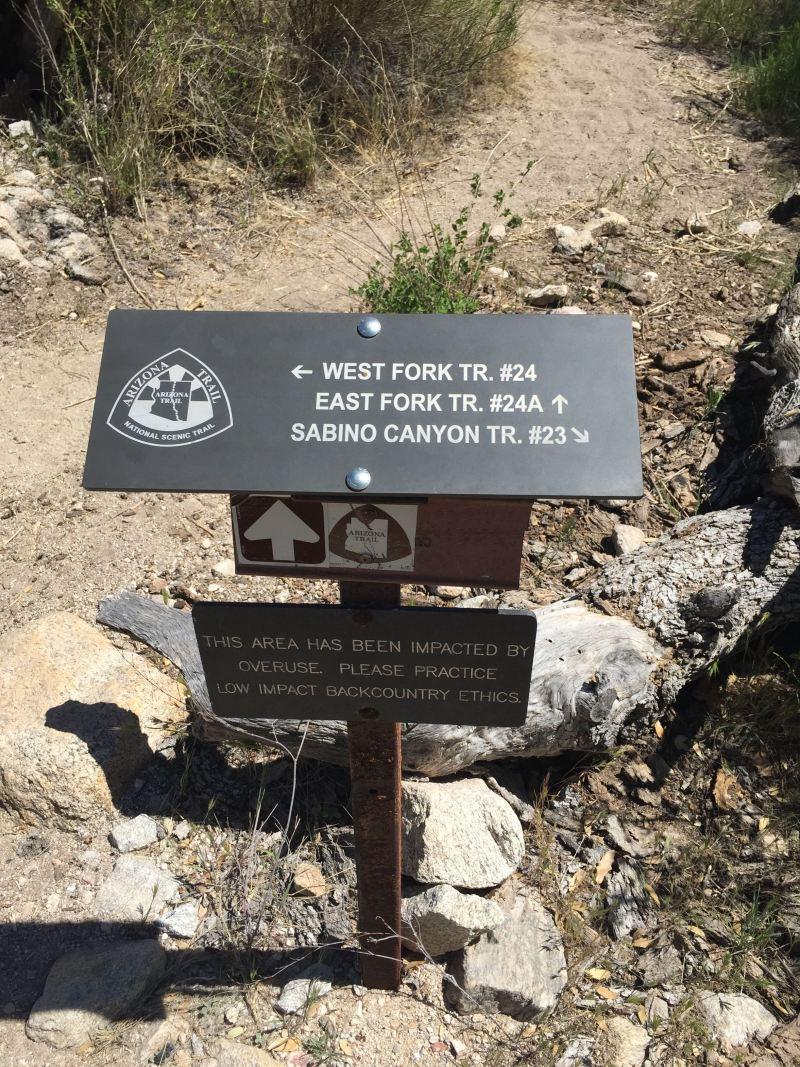Sabino Canyon Tucson Arizona