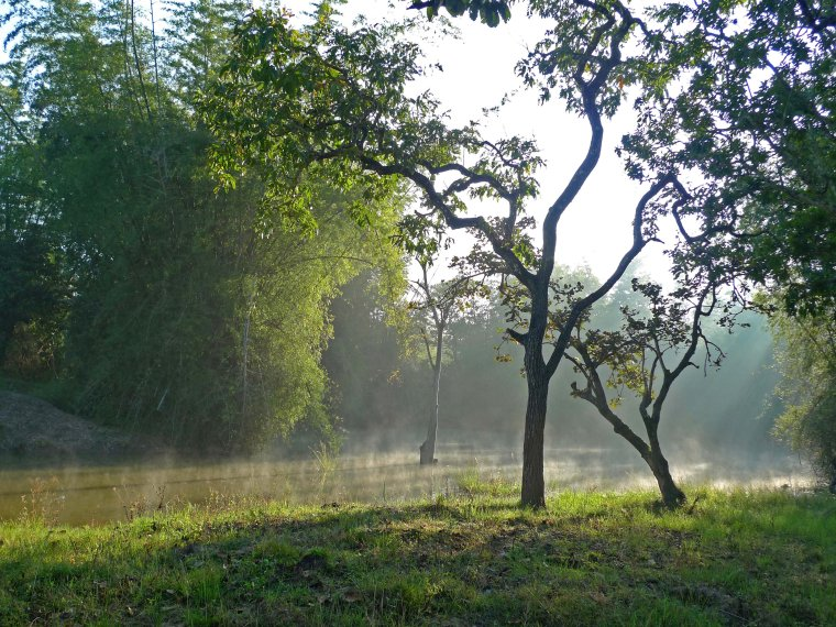 Morning at a water body inside the Bandipur Tiger Reserve (Photo credit: Nithila Baskaran)