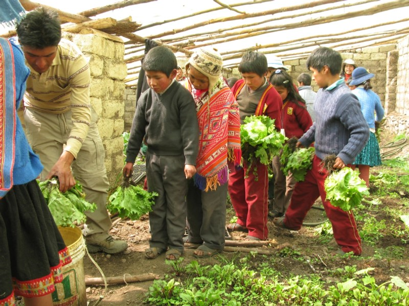 The teachers and students at the local school tend to one of the many greenhouses the organization implements to promote community development in Calca, Peru.