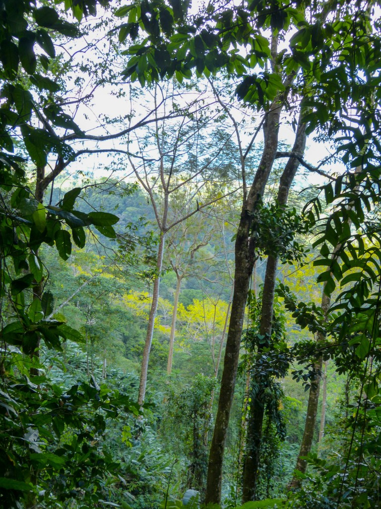 Corcovado National Park trees
