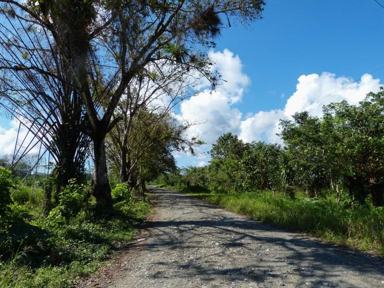 Dos Brazos de Rio Tigre, Osa Península, Costa Rica