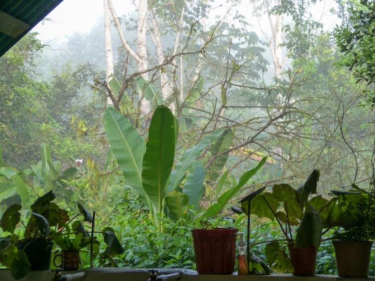 Rancho Quemado, Osa Peninsula Costa Rica