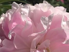 Rose Garden, Minneapolis, Minnesota