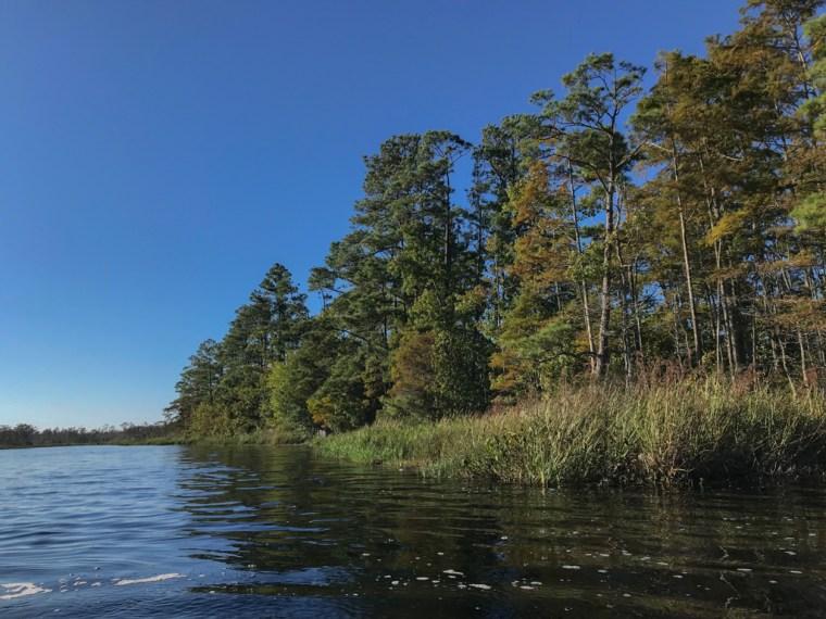 Coastal Kayak Tours, Alligator River Wildlife Refuge, NC