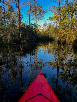 Coastal Kayak Tours, Alligator River Wildlife Refuge, NC