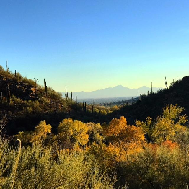 Sabino Canyon, Arizona