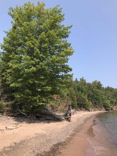 The shoreline