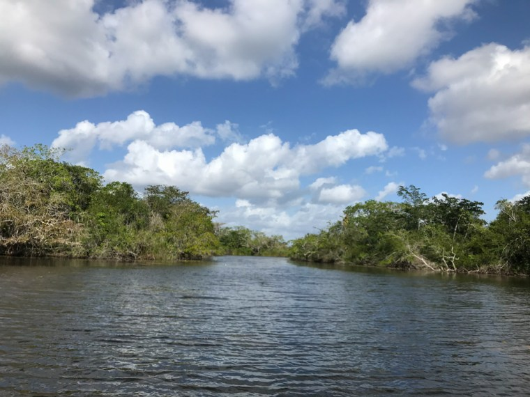 The New River, Belize
