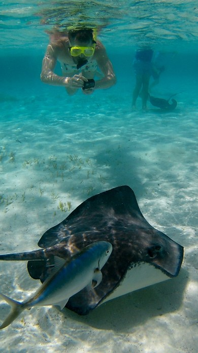 Shark Ray Alley Belize