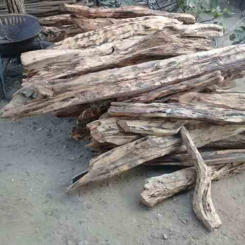 multiple branches of palo santo wood from a tree