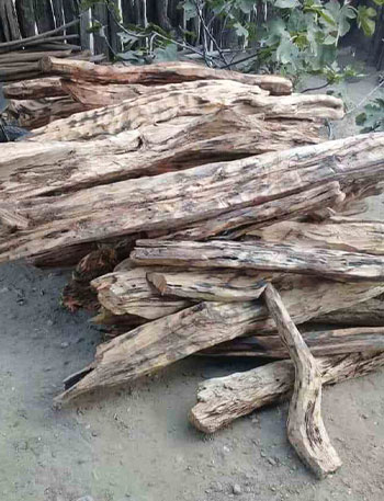 palo santo wood incense cut into large pieces