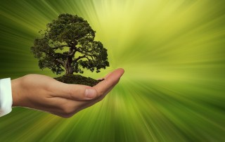 Businessman's Hand Holding Green Tree In Front Of Green Background