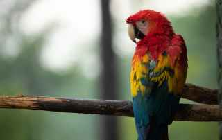Parrot In A Tree Protected Through Biodiversity Supply Chain Risk Mitigation
