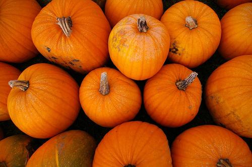 Pumpkins-2009