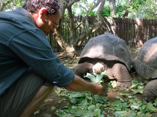 feeding tortoises on Changuu Island