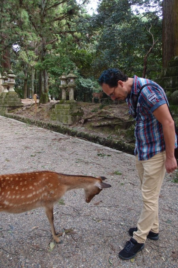 bowing to a deer at nara park, japan