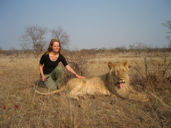 walking with lions Zimbabwe