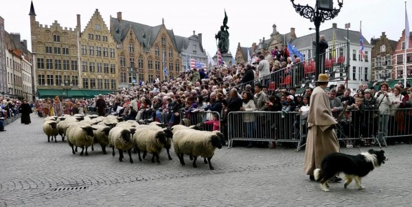 sheep, procession of the holy blood, Bruges, Belgium