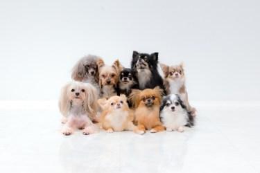 犬が飼い主を守ると言われていることについて。犬の習性を知ろう