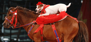 red-dog-and-pony-show