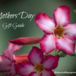 Mothers Day Gift Guide 2015