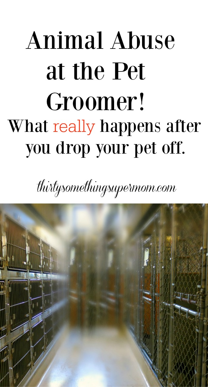 Animal Abuse at Pet Groomers