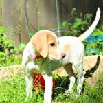 Learn the Signs of Heat Stroke in Dogs