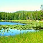 Plan the Ultimate Family Adventure in Estes Park Colorado