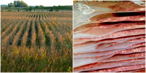 tips for making the field to freezer process easier are for hunters