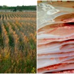 Simplify the Field to Freezer Process & Time Saving Tips for Hunters