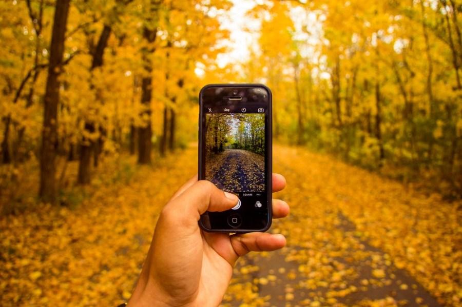 Smartphone in Autumn